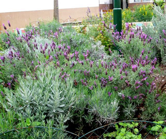 Pesquisar a natureza for Asociacion de plantas aromaticas